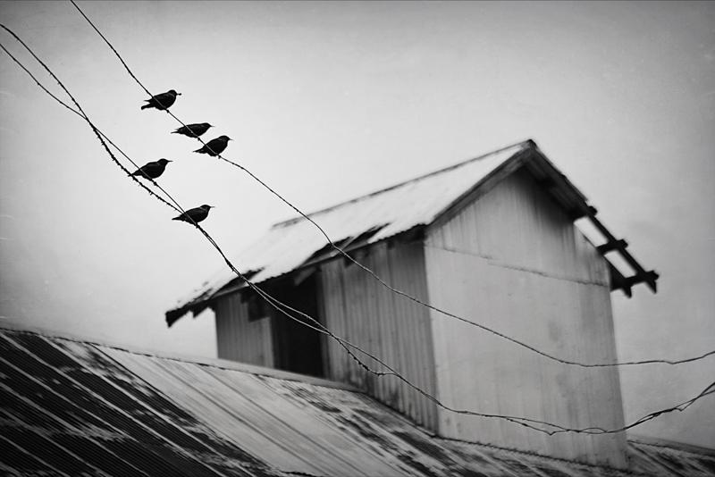 Affolter_Birdtalk